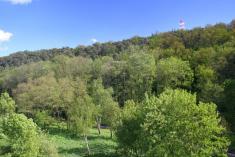 Údolí Výrovky aradimský háj